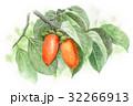 実がなっている柿の木 32266913