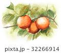 実がなっている柿の木 32266914