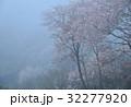 霧かかる山桜1(香川県さぬき市峰堂峠) 32277920