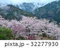 湧雲と桜2(徳島県三好市山城町信正) 32277930