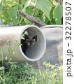 子猫 猫 黒猫の写真 32278507