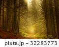 森林 林 森の写真 32283773
