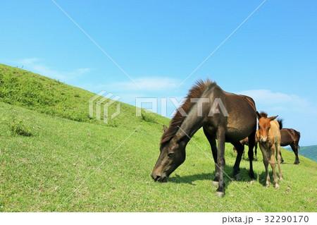 宮崎県 都井岬の馬 32290170