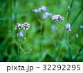 花 フラワー お花の写真 32292295