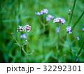 花 フラワー お花の写真 32292301