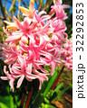 都立浮間公園のヒヤシンスの花 32292853