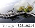胡蝶蘭 32310814
