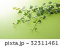 アイビー 観葉植物 葉の写真 32311461