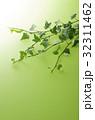 アイビー 観葉植物 葉の写真 32311462