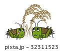 バッタと稲穂 32311523