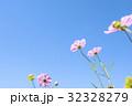 コスモス(空バック) 32328279