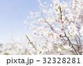 梅の花(白梅) 32328281