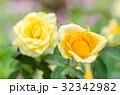 バラ バラ科 オレンジの写真 32342982