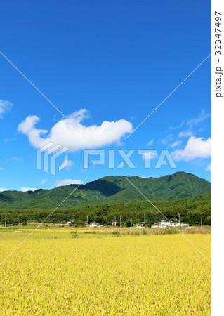 秋の青空と綺麗な田んぼ風景 32347497