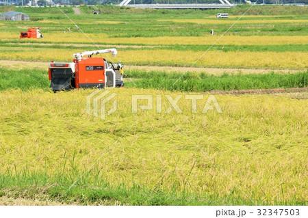 秋の田んぼとコンバイン 32347503