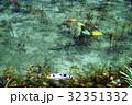モネの池 池 鯉の写真 32351332