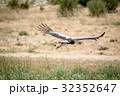 秘書 鳥 自然の写真 32352647