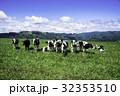 牧場 放牧 牛の写真 32353510