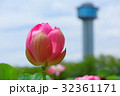 古代蓮の里 蓮 花の写真 32361171