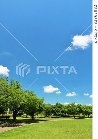 青空の公園 綺麗な並木道 32362982