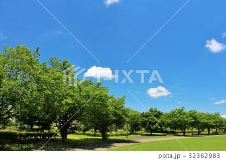 青空の公園 綺麗な並木道 32362983