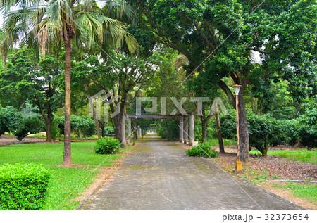 木 ツリー 樹 32373654