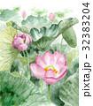 ハス 古代蓮 水彩のイラスト 32383204