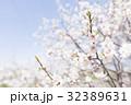 梅の花(白梅) 32389631