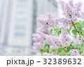 コピースペース ライラック 薄紫の写真 32389632