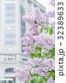 ライラック 紫 薄紫の写真 32389633