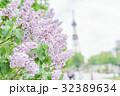 札幌大通公園のライラック(+テレビ塔) 32389634
