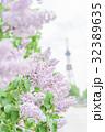 札幌大通公園のライラック(+テレビ塔) 32389635