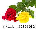 赤 赤い 赤色の写真 32396932