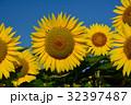 ひまわり 青空 黄色の写真 32397487