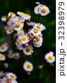植物 花 野草の写真 32398979