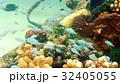 海 写真 32405055