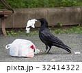 公園のゴミを漁るカラス 32414322