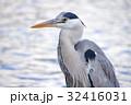 鷺 鳥 野鳥の写真 32416031