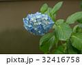 あじさい 花 植物の写真 32416758