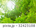 背景 葉 森林の写真 32423108