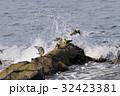 アオバト 鳩 鳥の写真 32423381