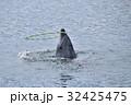 つくみイルカ島 (大分県津久見市) 32425475
