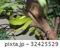 木の枝に巻きついた緑色のへび 32425529