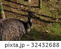 エミュー 鳥 鳥類の写真 32432688
