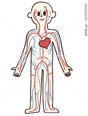 動脈と静脈のイラスト 32433243