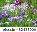 花菖蒲 花 アヤメ科の写真 32435000