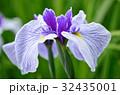 花菖蒲 花 アヤメ科の写真 32435001
