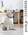 犬 子犬 小犬 仔犬 こいぬ 戌年 dog 子供 2018 年賀素材 正月素材 32448688