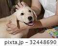 犬 子犬 小犬 仔犬 こいぬ 戌年 dog 子供 2018 年賀素材 正月素材 32448690