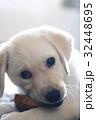 犬 子犬 小犬 仔犬 こいぬ 戌年 dog 子供 2018 年賀素材 正月素材 32448695